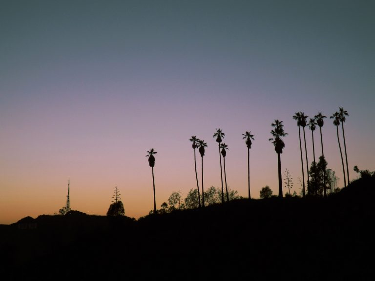 palm trees big city